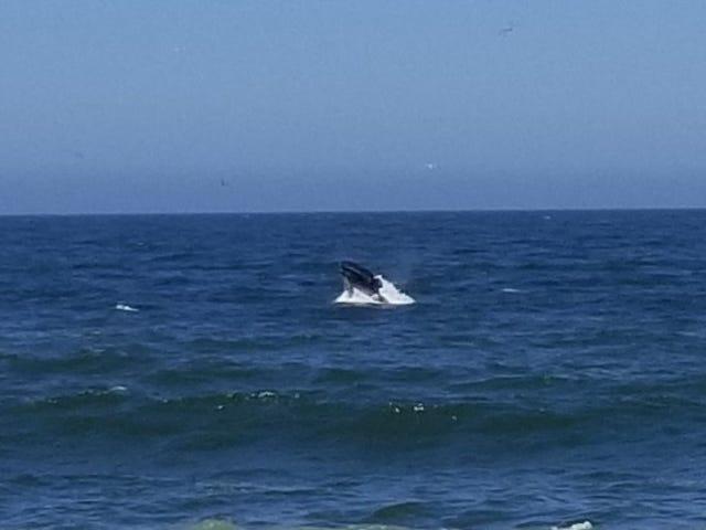 Una ballena de una semana