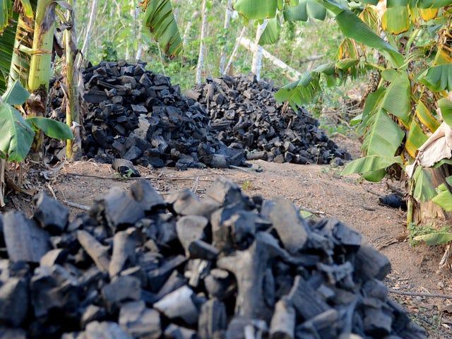 化粧品の木炭が実際に何でもするという証拠はありません。