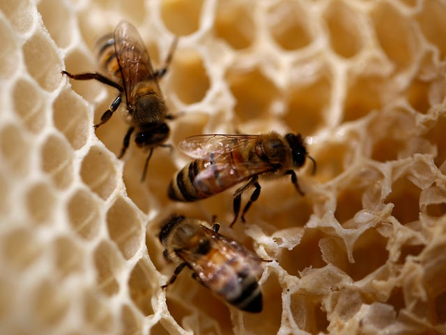Scientists Want to Use Honey From Beehives to Monitor Pollution