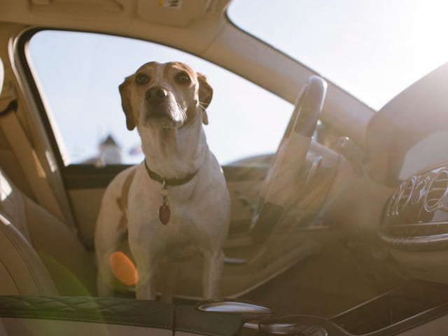 Drivers Want To Record Their Car And Protect Their Dogs: Google