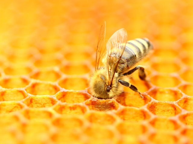 California almond industry might have the blood of billions of bees on its hands