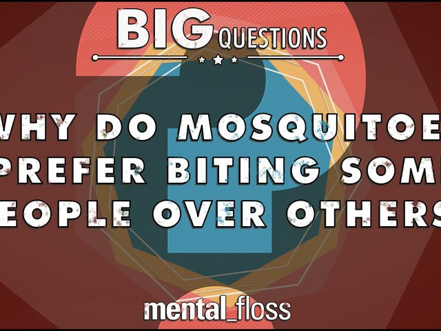 Why Mosquitoes Like Some People More Than Others