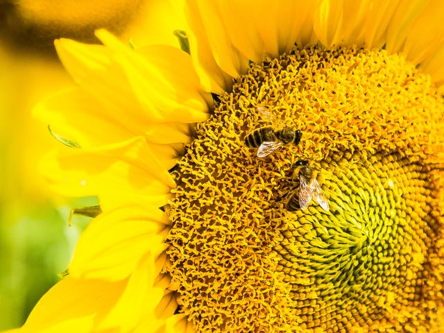 Intriguing New Research Suggests Honeybees Can Do Simple Math