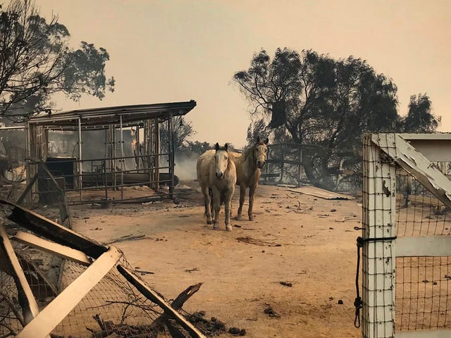 Meet the Heroes Who Saved Malibu's Horses From a Fiery Inferno