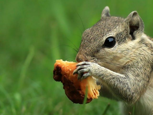 Saturday Night Social: Dihoskan oleh Sanctuary Squirrel Itu juga Kelab Seks