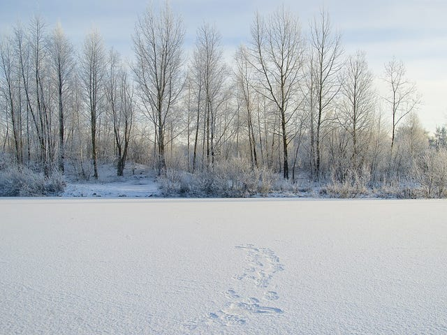 Las frías tierras de Siberia podrían convertirse en un destino habitable en 2080