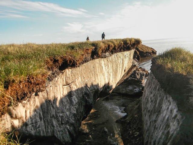 Permafrost Soils Contain 'Extraordinary' Levels of Mercury