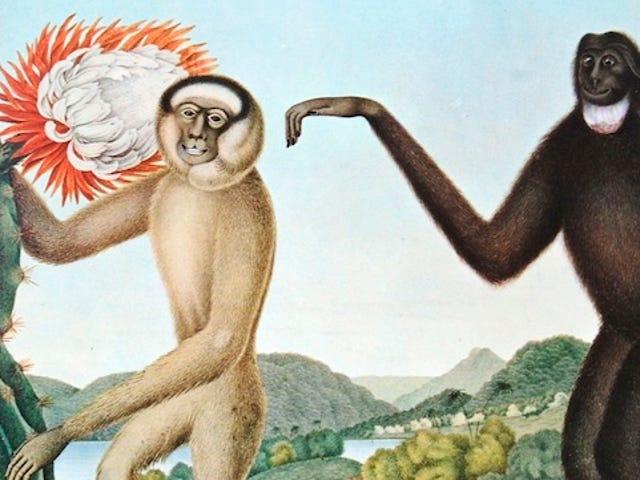 Як європейці уявляли екзотичних тварин віками, на основі Херсей