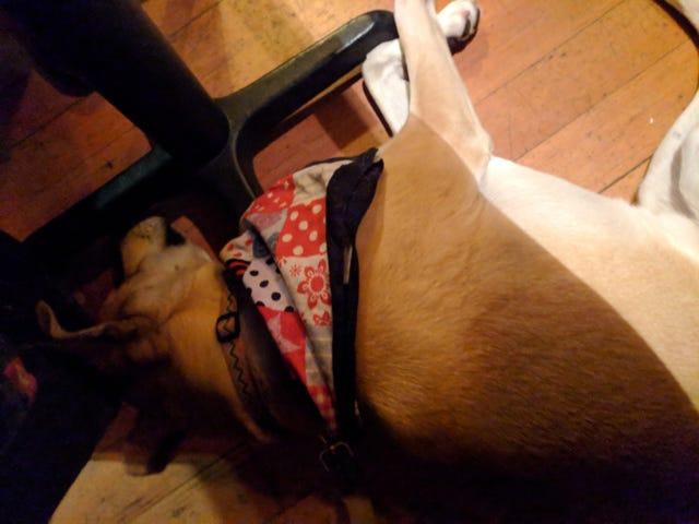 Alehouse doggo