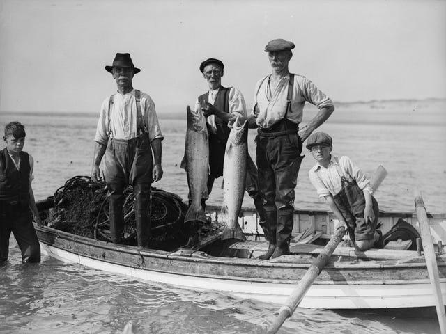 如何去钓鱼,而不是挂钩自己的脸