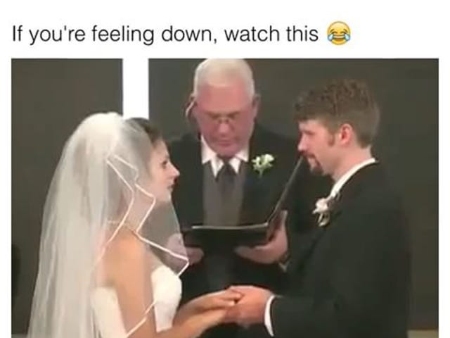 Wedding. (No animals)