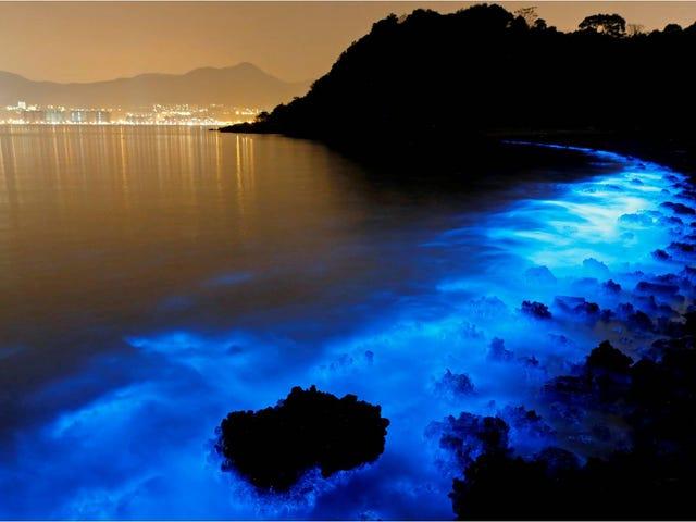 Este agua fluorescente es en realidad producto de la contaminación
