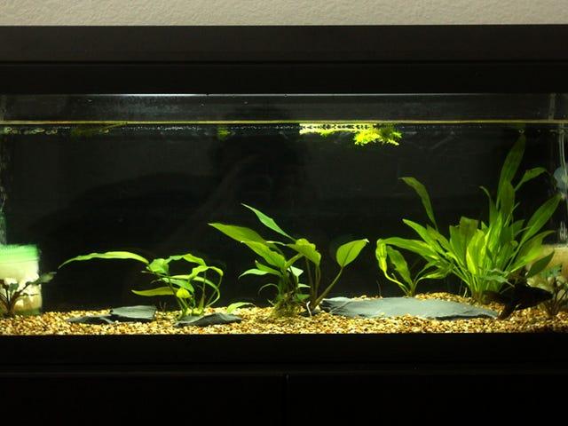 Fishlopposite