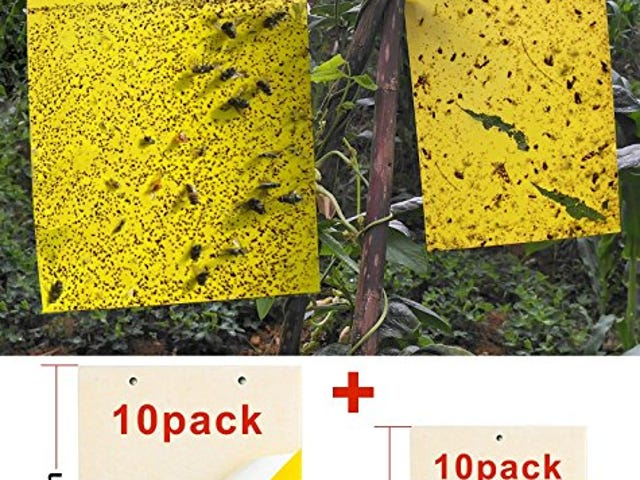 Give Your Garden and Orchard Peaceful World with This Dual-Sided Yellow Sticky Traps