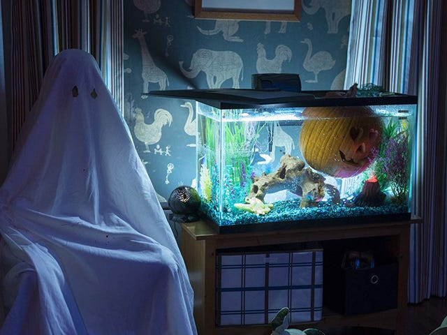 Ang Bagong Halloween Maaaring Maging Mas Sensitibo kaysa Kailanman, Ngunit Mas Maraming Brutal