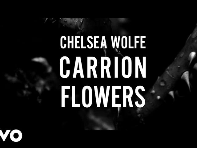Deadspin Up All Night: Carrion Flowers