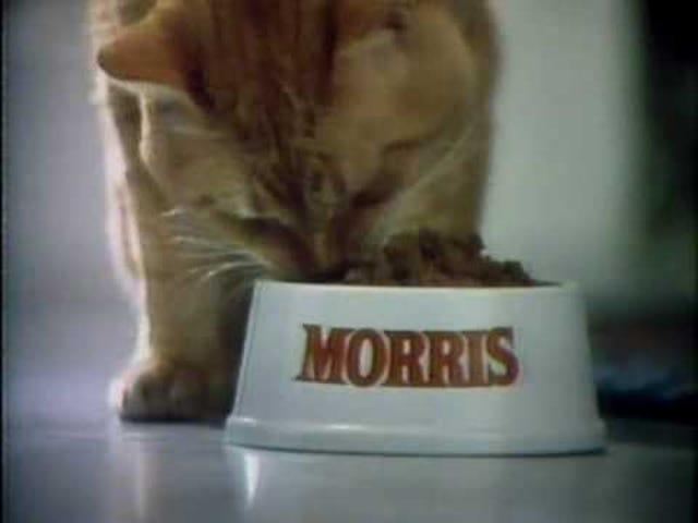 모리스 고양이