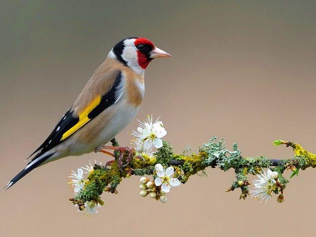 Tweet Salı: Interwebs ve Çiçekler ile Kuşlar Doğruluk