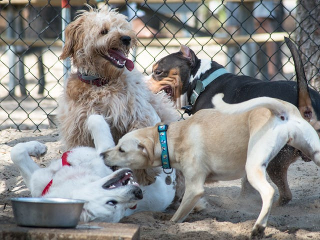 "Read This: Rich people mad that dogs at dog park not following ""no excessive barking"" signs"
