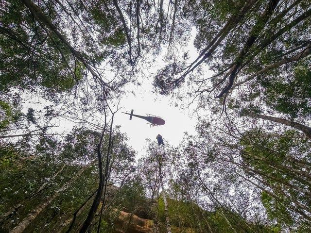 """Feuerwehrleute retten Australiens gefährdete """"Dinosaurierbäume"""" vor wütenden Buschfeuern"""