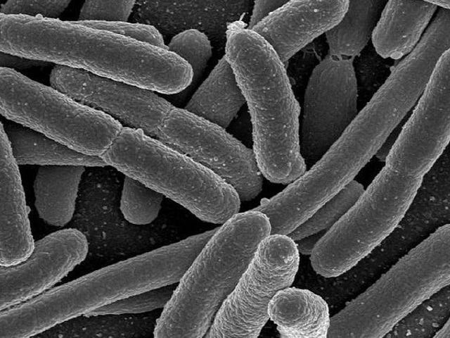 New Studies Reveal Intimate Links Between Human Microbiome and Preterm Pregnancies, IBD, and More