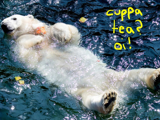 This Soft Bear Enjoying An Ice Cake with Frozen Fruit Reminds Me of Harry Styles
