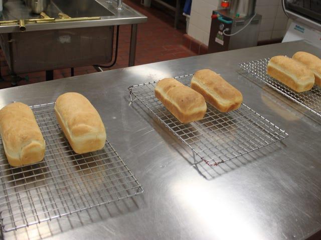 부패한 빵을 먹으면 미친 건강상의 이점이있을 수있다