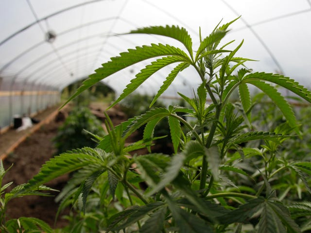San Francisco Will Clear Thousands of Marijuana Convictions Dating Back to 1975