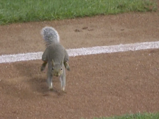 Idiot Squirrel On The Field Successfully Invades Consecutive Twins Games