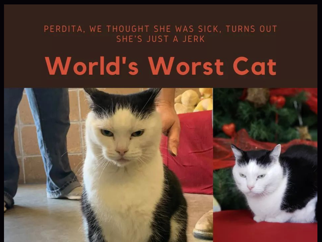 私は誰もが病気だと思っていたが、実際にはただの嫌いな人であるこの猫に触発されました