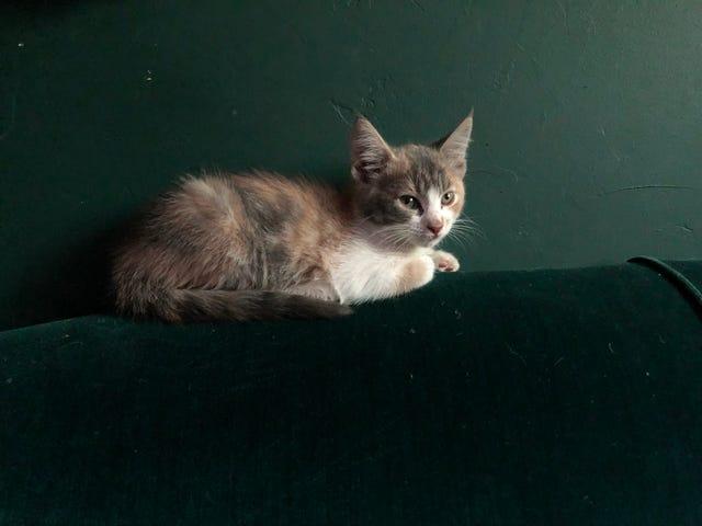 Kittening intensifies