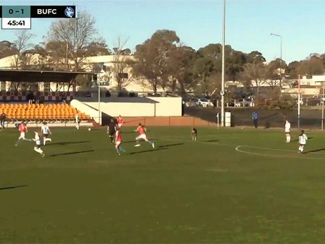 Känguru auf dem Feld ist großartig beim Laufen, grausam beim Treten des Balls