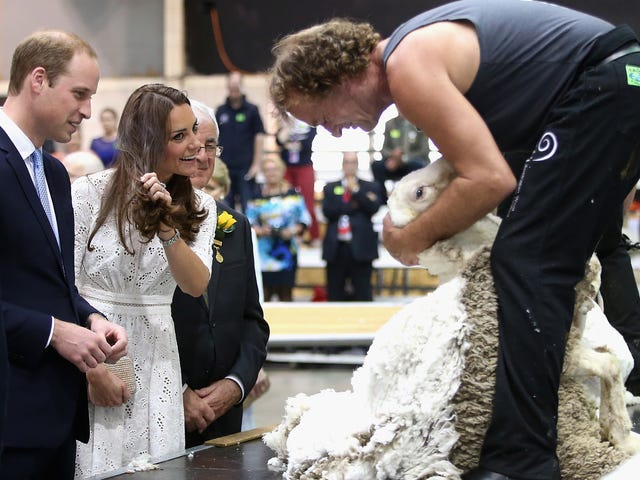 Shouldn't This Sheep Shorn by the Duchess of Cambridge Be Screaming Like a Human?