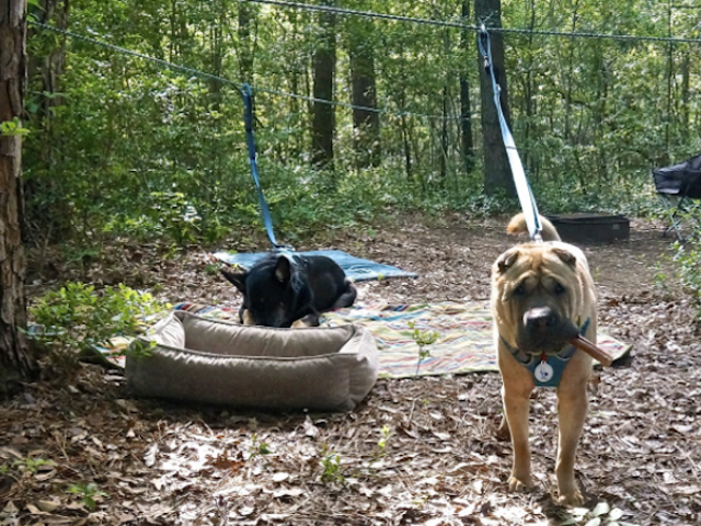 Make a Zip Line for Your Dog to Let Them Explore Safely