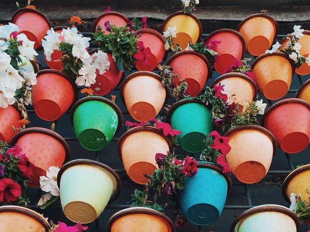 Your Potted Plants Don't Need Gravel