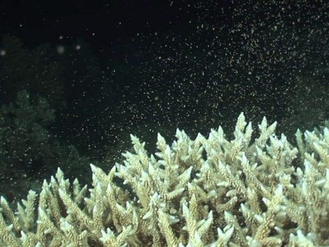 这是年度珊瑚狂欢的所有数字游戏