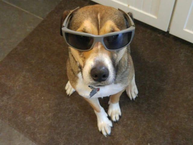 Sick Doggo and a really bad day