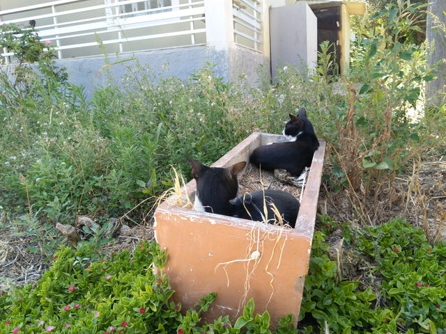 Oo they grow kitties in pots here