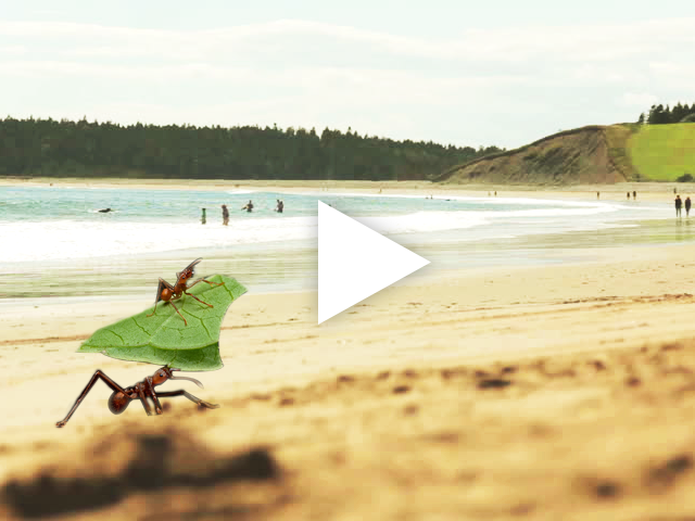 Watch This Leafcutter Ant Catch A Tasty Wave