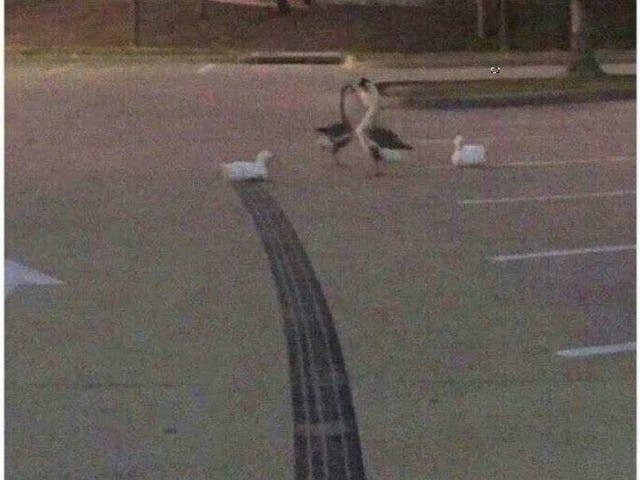 Keep Oppo Duck
