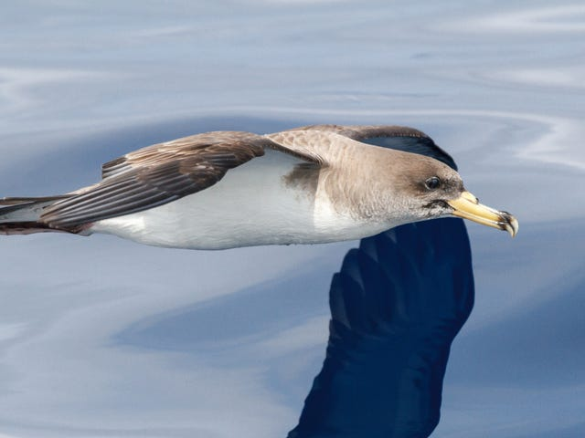 Scientists Have a Plan to Turn Seabirds Into Tiny Ocean Science Labs