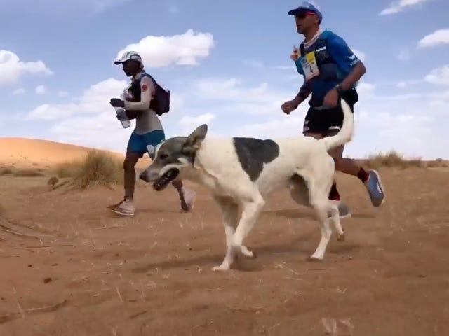 Dog Runs Grueling Desert Ultramarathon Just For Fun