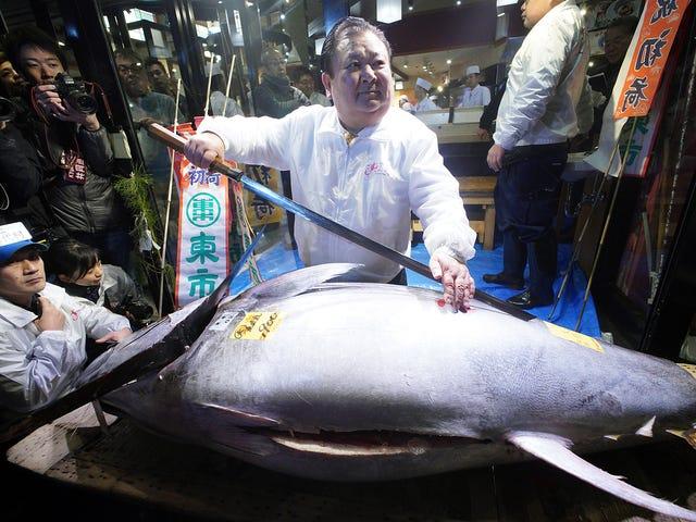 Japanese Sushi Magnate Lance 2019 en ridiculement surpayant pour le thon rouge, le regrettant