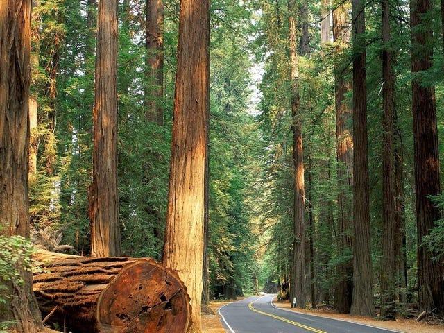 Gelecek Hafta Sonu Sequoia Ulusal Parkı'na Gidiyor