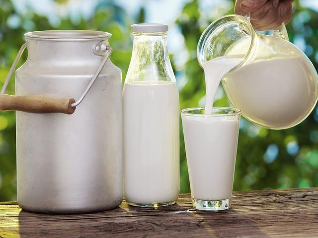 La leche cruda está detras de 96 de cada 100 intoxicaciones por lácteos in Estados Unidos