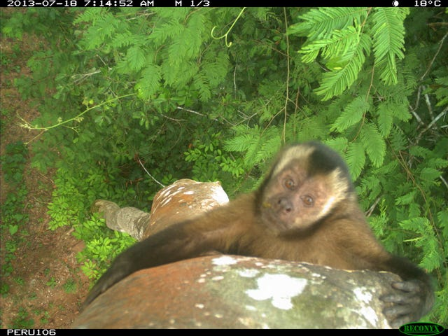 Treetop Camera Traps Catch Animals In Their Most Candid Moments