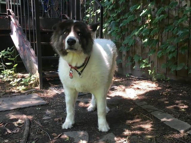 Luna Tolentino: Anjing Besar Selanjutnya