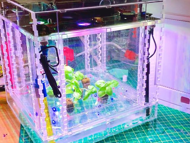 MIT Membina Theranos untuk Tumbuhan