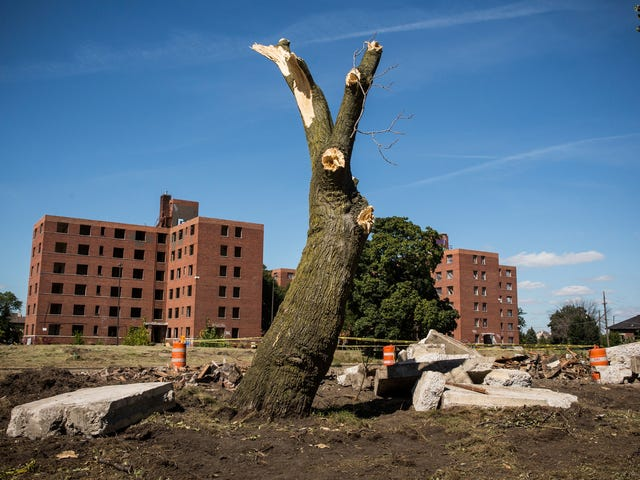 Who Doesn't Want Trees? Lots of Detroit Residents, and They Have a Good Reason