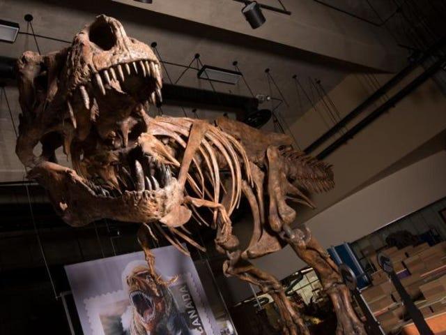 Paleontólogos de Canadá descubren el <i>Tyrannosaurus rex</i> más grande conocido hasta la fecha: Scotty